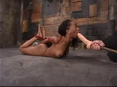 Stacey Specie Is Hogtied
